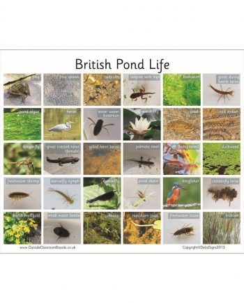 British Pond Life Board
