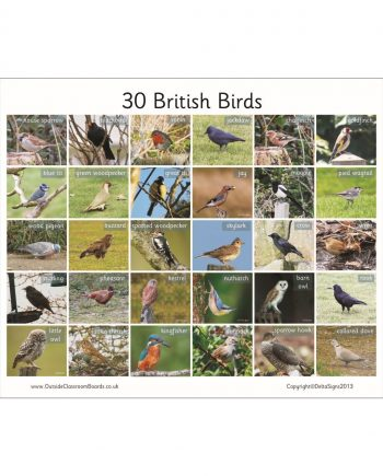 British Birds Board