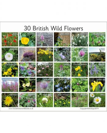 British Wild Flowers Board